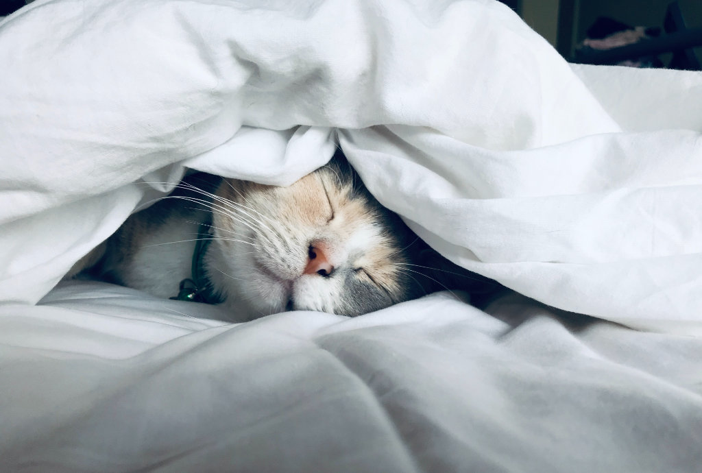 A cat peacefully sleeping under a white comforter.